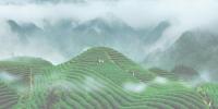 铅山县黄岗山有机资源开发有限公司——种茶就种生态茶 - 农业厅