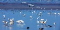 鄱阳湖保护区:防控疫情与保护候鸟并举 - 上饶之窗